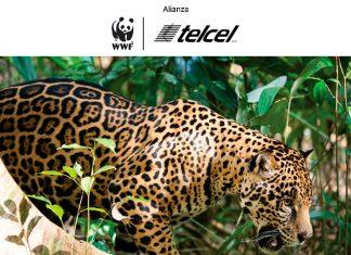 Alianza WWF Telcel