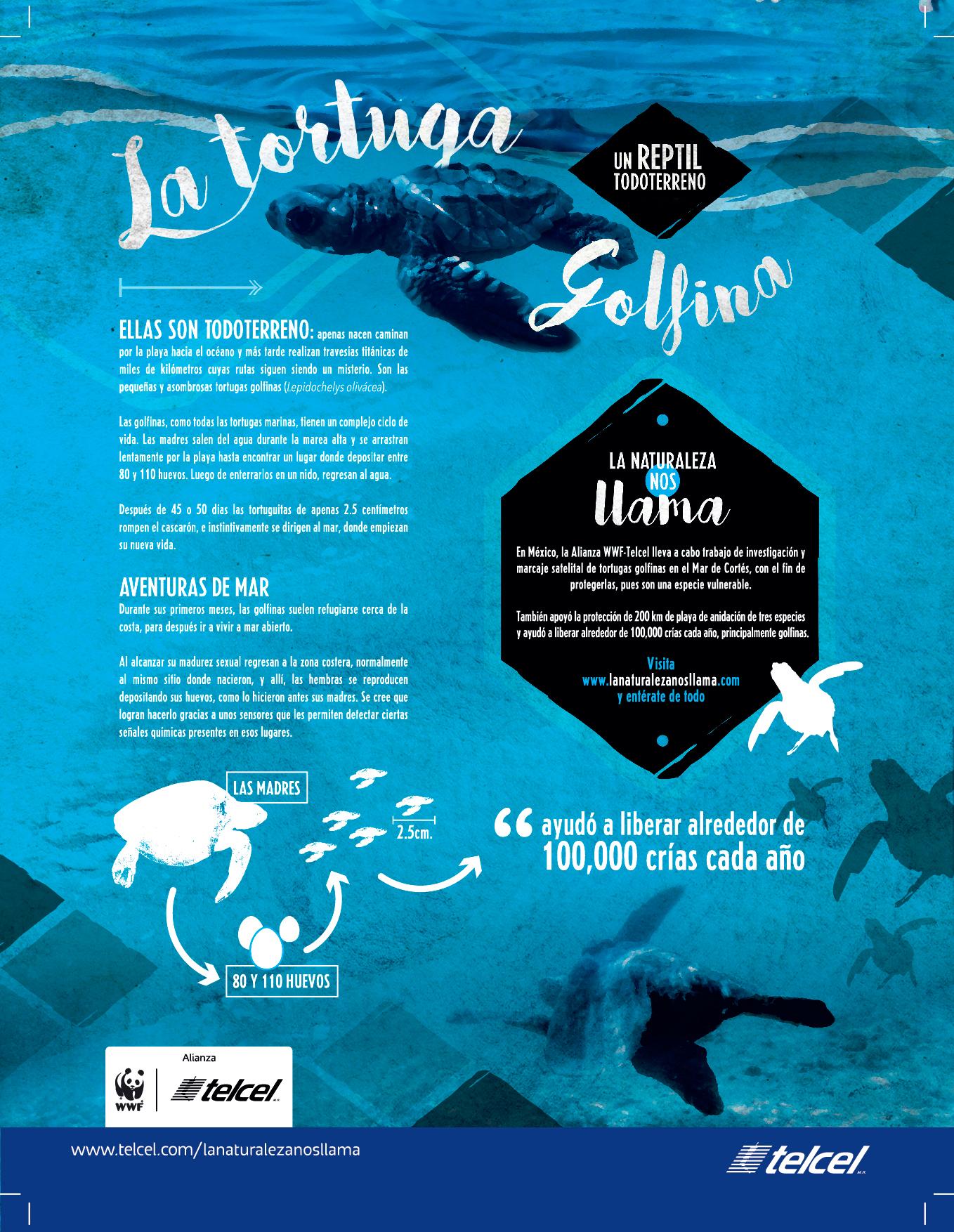 tortuga-golfina-alianza-wwf-telcel