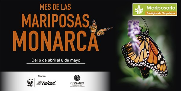 mes-mariposa-monarca-4
