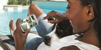 comunicación perro