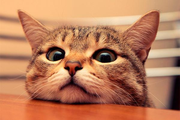 ¿Por qué se dice que agosto es el mes de los gatos? | Best for Pets