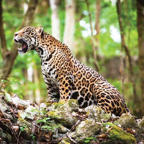 (Foto: Alianza WWF-Fundación Telmex Telcel)