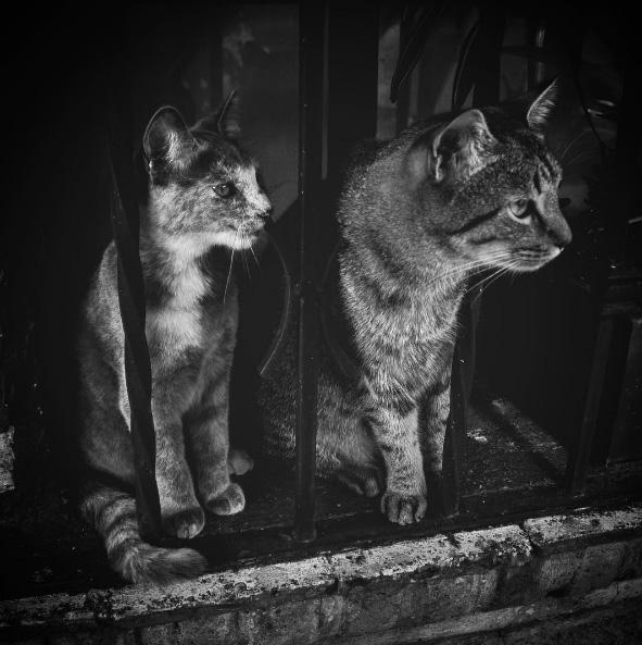 En esta cuenta, los gatos roban cámara. (Foto: Instagram @hansolothecat)
