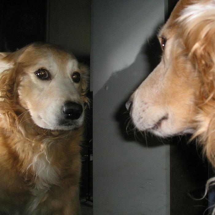 meme perro