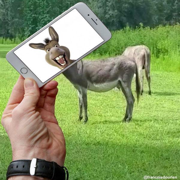 @francoisdourlen burro de shrek