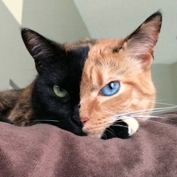 memes gatos