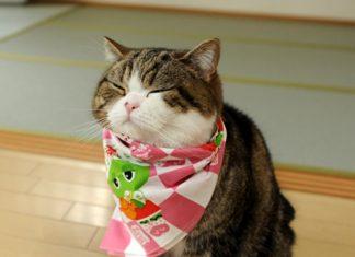 Gato Maru Record Guinnes
