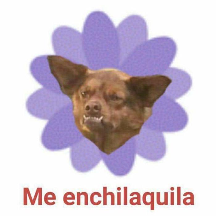 Imagen Principal 21 al chilaquil! estos son los mejores memes de mayo holatelcel com