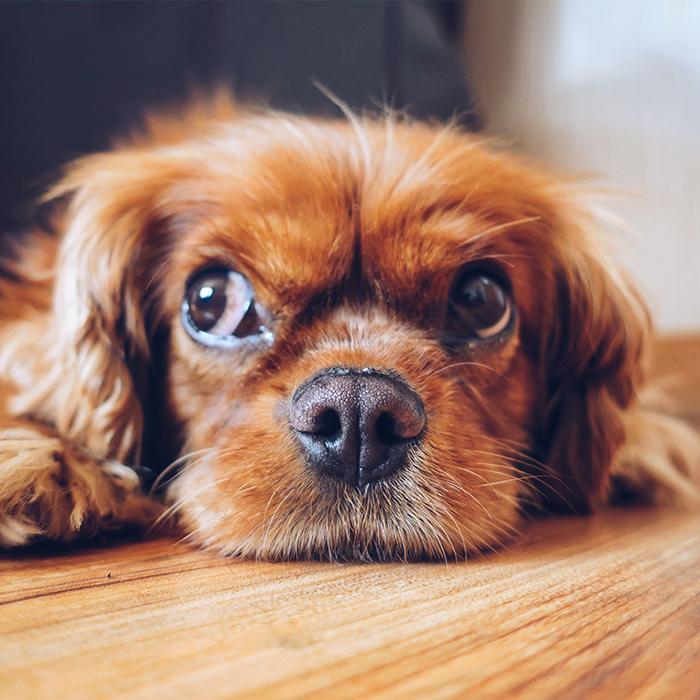 A perrito