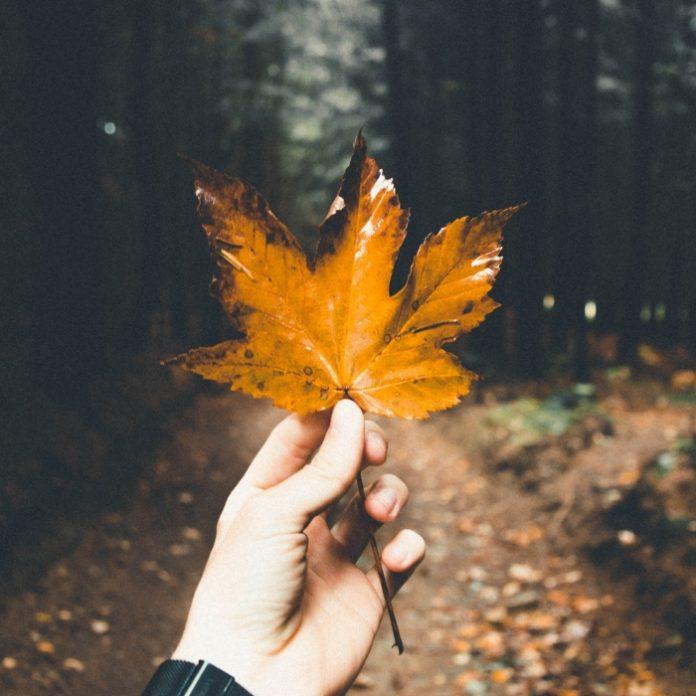 Películas para otoño