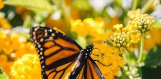 Conoce cómo la Alianza WWF-Fundación Telmex ha ayudado a la Reserva Monarca