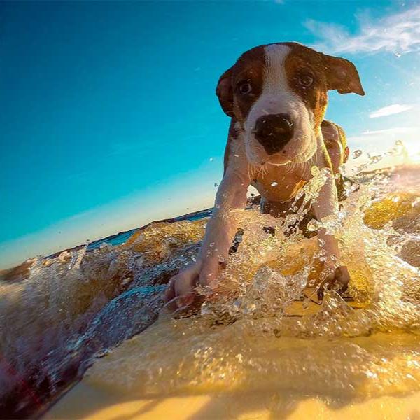 perro playa semana santa
