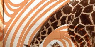 jirafa con zapatos ortopedicos