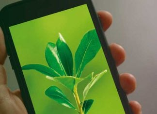 Cuidar el medio ambiente desde tu celular