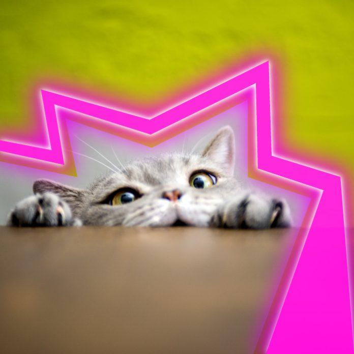 gatito clonado