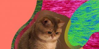 dina internacional del gato