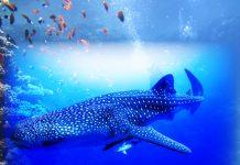 Tiburón ballena tecnología
