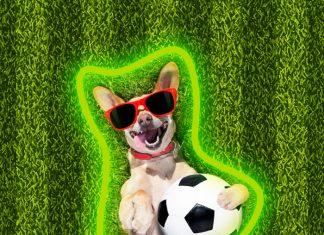 perritos futbol