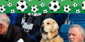 perro Yardley aficionado al futbol