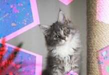 lenguaje de gatos