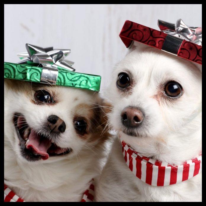 Perritos Navidad Test