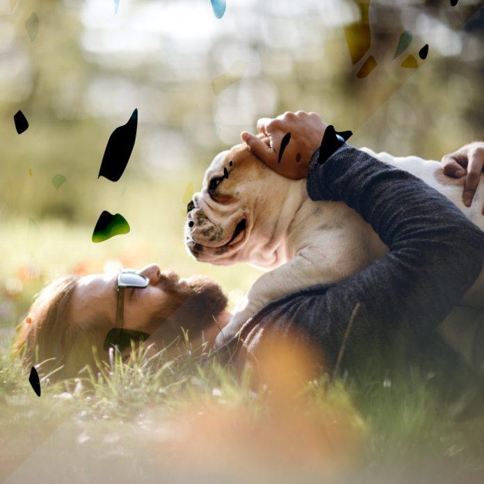 que hacer cuando un perro se pierde