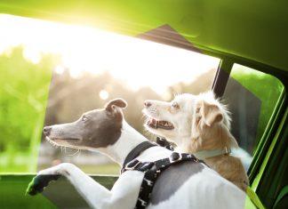 Uber para perros