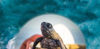 Liberación tortugas marinas