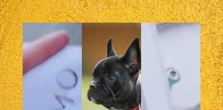 mensajes-perro-novios