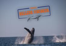 Participa con tu familia en el proyecto Ballena Jorobada
