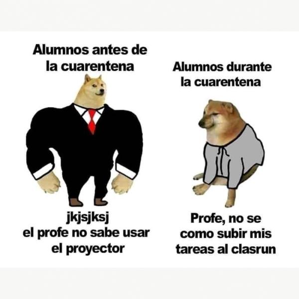 Cheems origen perrito memes