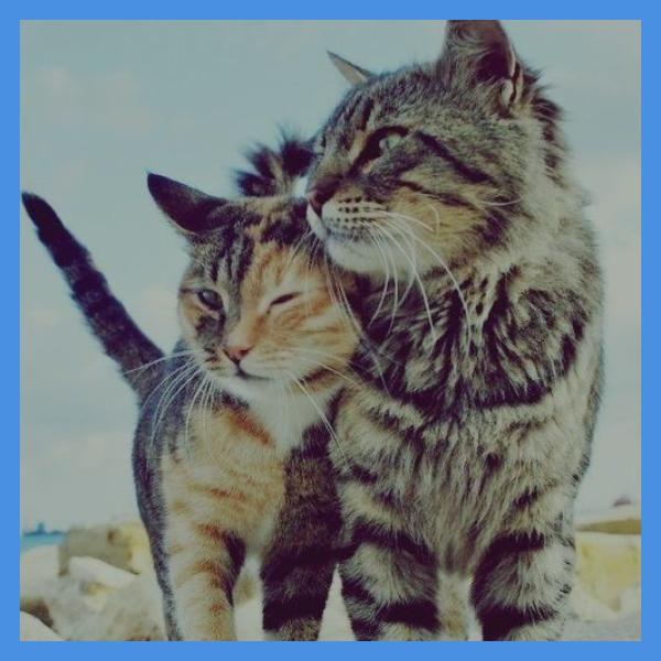 Dos gatos abrazados dia del gato