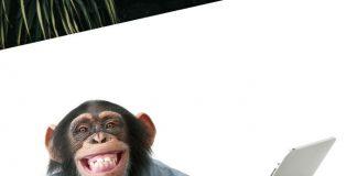 chimpancés hacen zoom para comunicarse entre ellos y hacerse compañía
