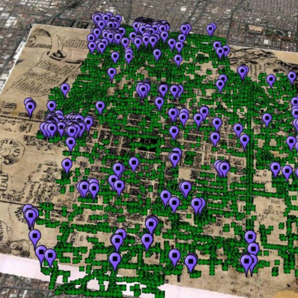 Google Earth localización de jacarandas