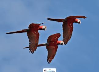 proyecto de guacamaya roja de Alianza WWF-Fundación Telmex Telcel