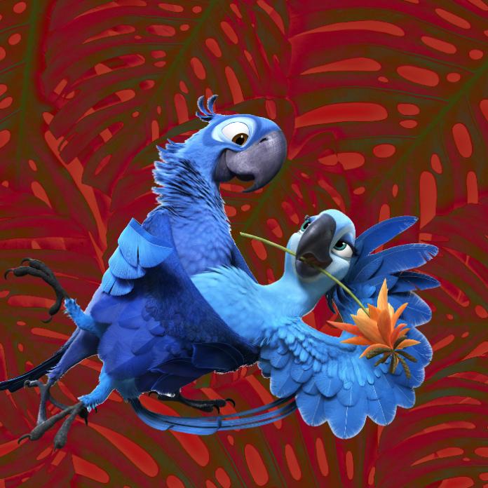 ¡Están de vuelta! Nace guacamayo azul que inspiró la película 'Río'- Blog Hola Telcel