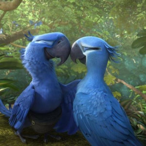 Río, Blue y Perla, los últimos guacamayos azules del planeta.- Blog Hola Telcel