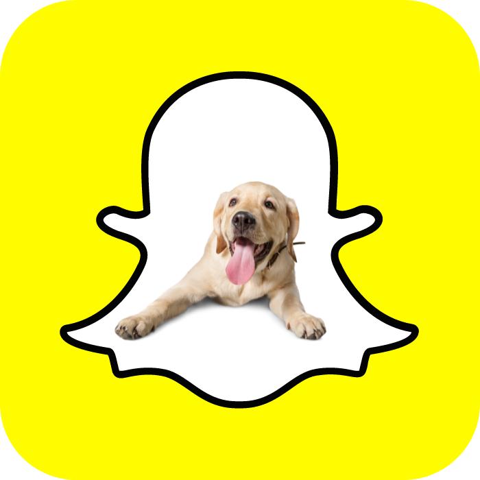 El Scan de Snapchat te permite scannear perritos - Blog Hola Telcel