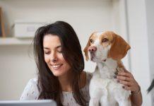 CURP para mascotas: ¿Qué es y cómo puedes registrar a tu perrito?- Blog Hola Telcel